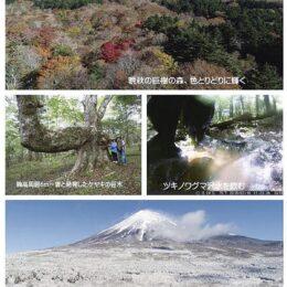 写真展「富士山からの贈り物・巨樹の森の四季」@丹沢美術館