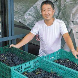 地場ワイン 醸造はじまる  2022年3月に300本完成予定<横浜市保土ケ谷区>