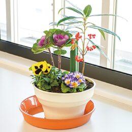<要事前申込・川崎市幸区在住・在学・在勤>ベランダや玄関口にも置ける「お正月の寄せ植え講座」