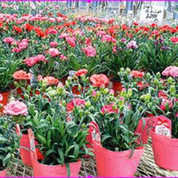 相模原市の花工房しまざきは『温室から直接あなたへ』を大切にするお花屋さんです