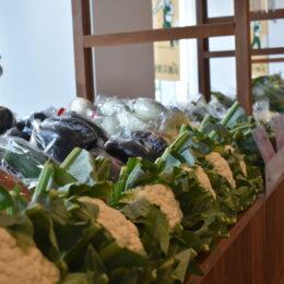 【体験レポ】横浜市役所でやっている横浜野菜の直売所に行ってみた!