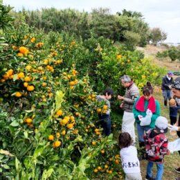 農作物収穫体験参加者募集!みかん・焼いもコースを満喫しよう@中井町中井中央公園