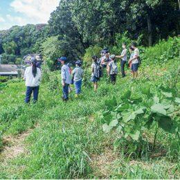 【町田市内在住・在学の小学生対象】菜園を一緒に作ろう「夏野菜の種採りとサツマイモの収穫」@町田市本町田:ひなた村