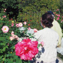 小田原フラワーガーデンで『2021秋ローズ』開催中!豊かな香りと色の秋バラを堪能して