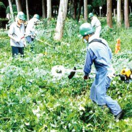 【下草刈りボラ参加者募集】森の素晴らしさ知る「木もれびの森下草刈り体験」@相模原市南区:こもれびの森