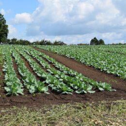 農業の魅力にジカ触れ!「第1回農業入門」@生涯現役フルライフはだの